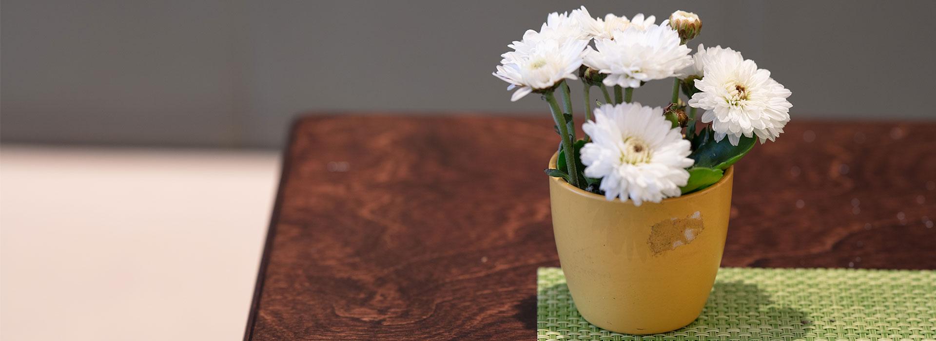 Blume auf dem Tisch in der Auszeit in Werne